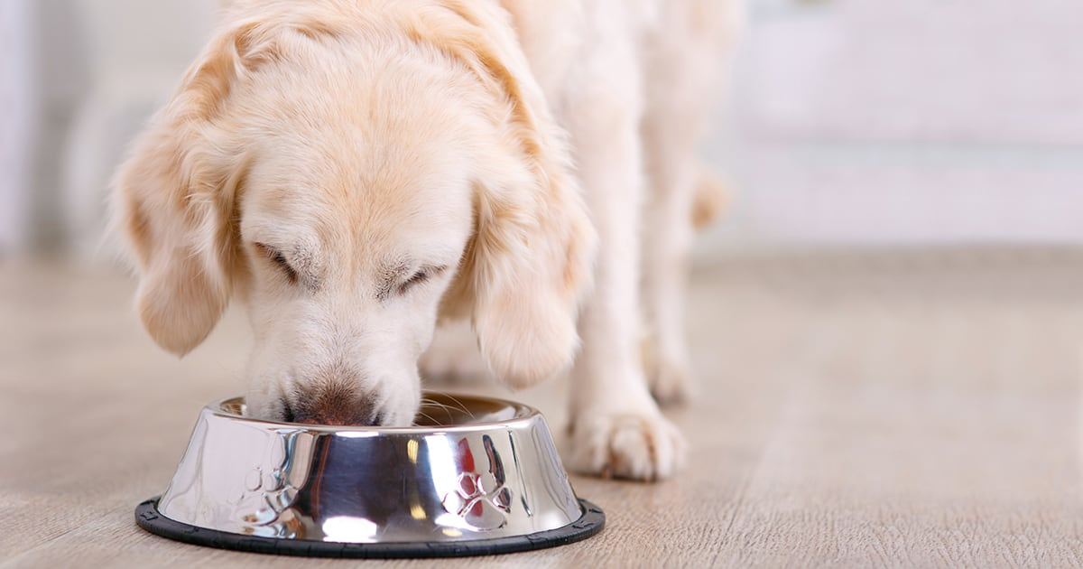 A Dog Eating from a Bowl | Diamond Pet Foods