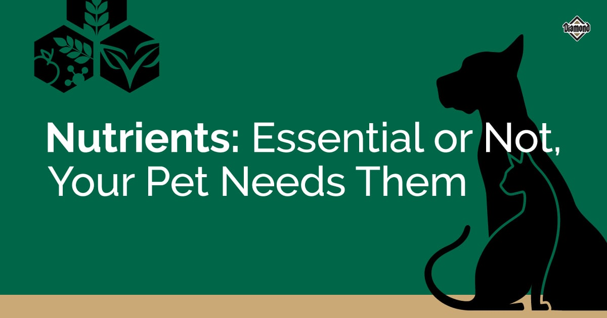 Essential or Not, Your Pet Needs Them Title Card | Diamond Pet Foods